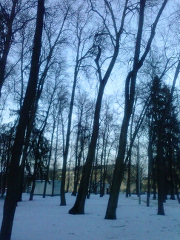 park2-sarov-march-512